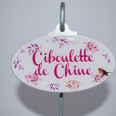 Ciboulette de Chine